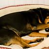 Krista_sleeping_w_toy_6618