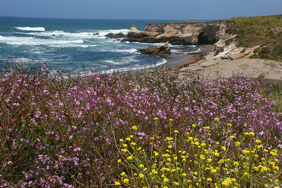 Point Buchon Hike. This area is at the south end of Montana de Oro and is administered by PG&E