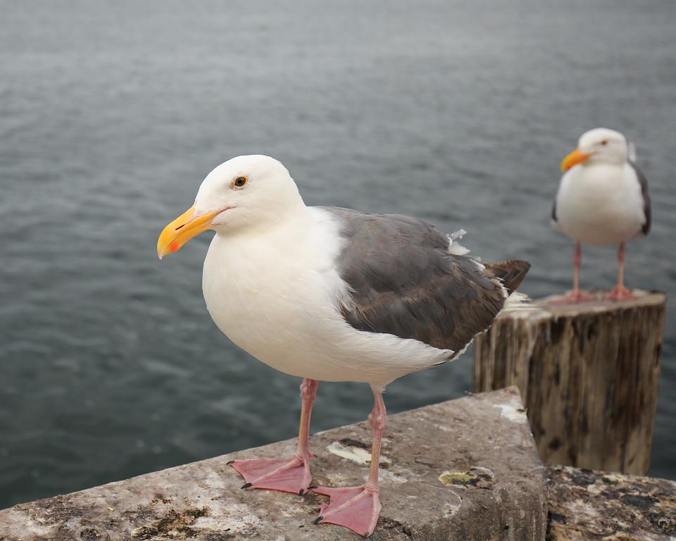 IMAGE: http://www.tkphoto.me/Family/Monterey-2014/i-pjd8vdB/0/XL/Monterey-20140712-140-XL.jpg