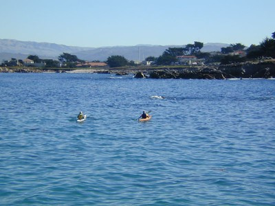 SCUBA Divers in Monterey Bay