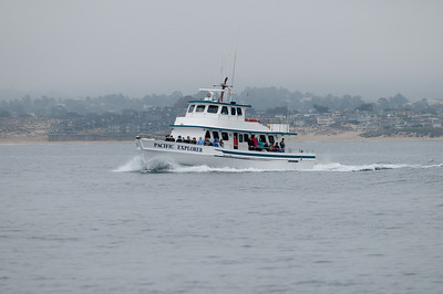 One of the other charter whale watching boats headed out to sea
