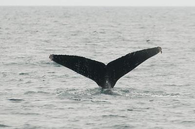 Monterey-20100708054755_2641