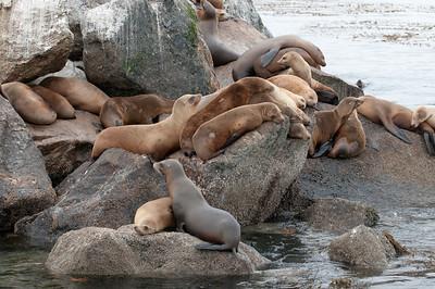 Sea Lions on the breakwater