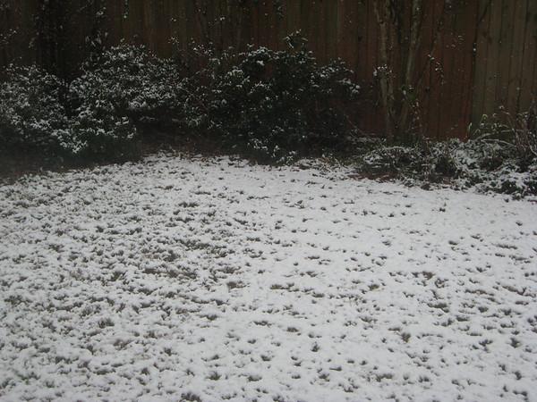 Montgomery Snow - 2009-03-01