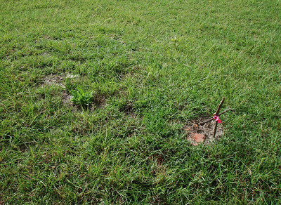 MOORE, BURGESS HOPKINS  Dec 19, 1903 – Apr 5, 1921 Lometa Cemetery, Section B, Lometa, Texas  I made this rudimentary cross to mark the head of her grave for photo purposes, but went ahead and left it there in her honor. I just hope the groundskeeper didn't mow over it.