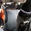 <b>30 March 2012</b> Driving to Pipestone with Finn and Lulu
