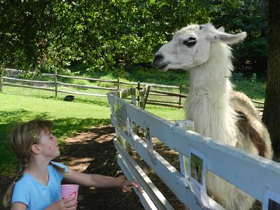 That llama is TALL!