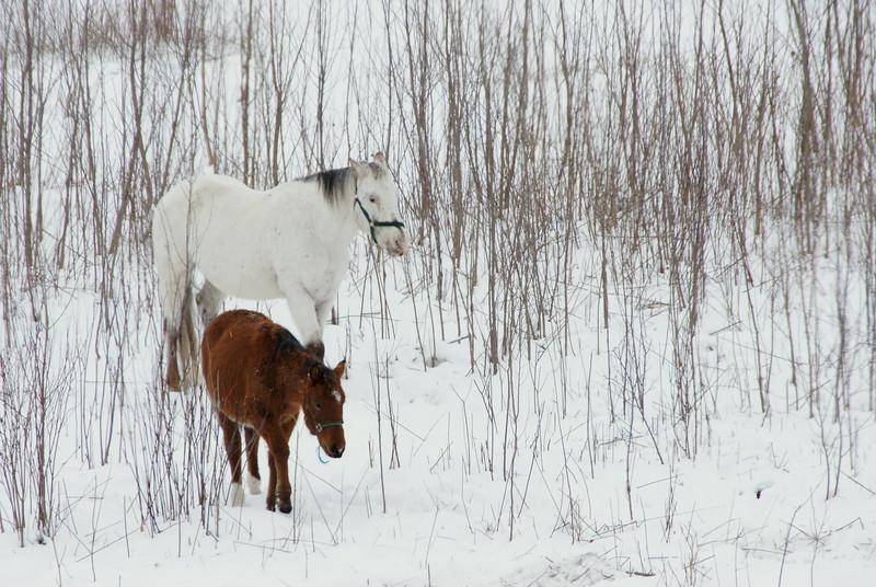 Horses, Bridge in snow (a700) - December 2007 009.JPG