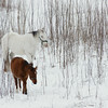 Horses, Bridge in snow (a700) - December 2007 009.JPG