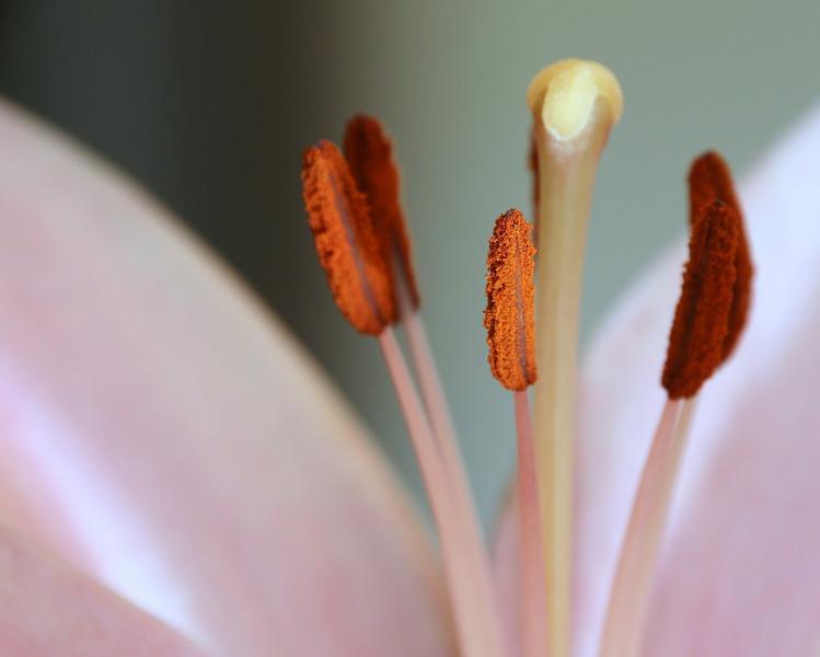 flower macros with 18-250 (a700) - February 2008 011.JPG