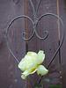 DSCN1442 yellow rose heart