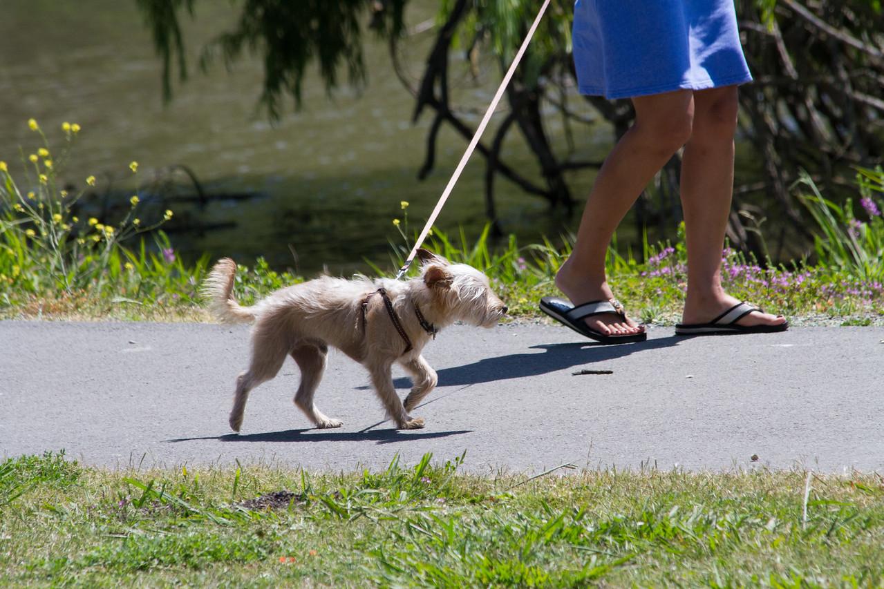 Random smalll dog