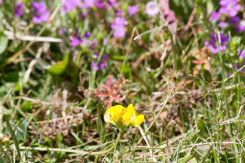 IMG_8687WildflowersYellowPurple