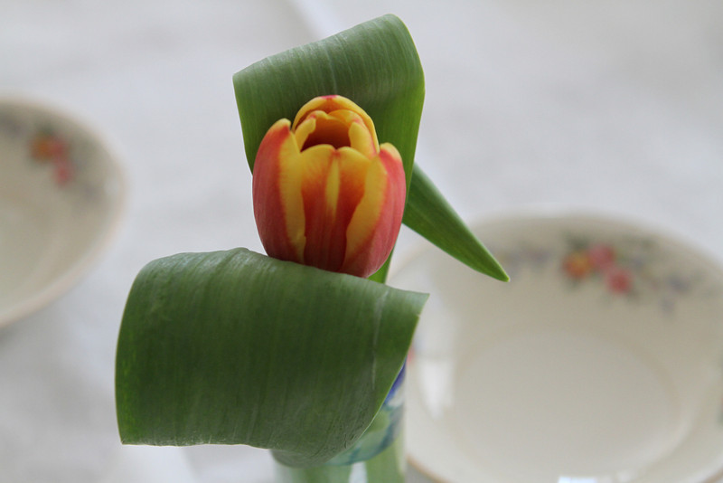 Laura brought fresh tulips for the table.