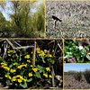 Wetlands, marshes and a variety of plants and wildlife add to the trail experience.