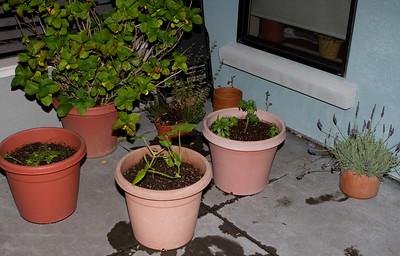 The patio garden