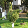 Topiary at gas station