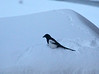 Lots of magpies about.