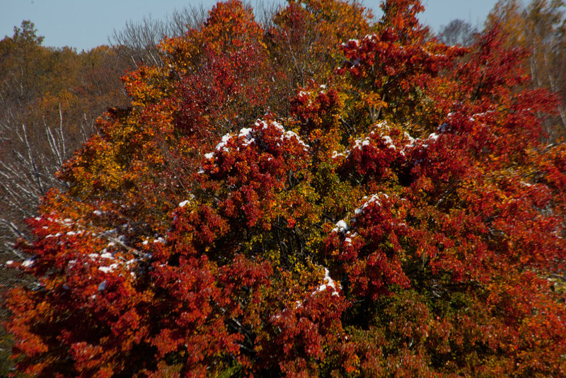 It was odd to have Fall foliage and snow on it.