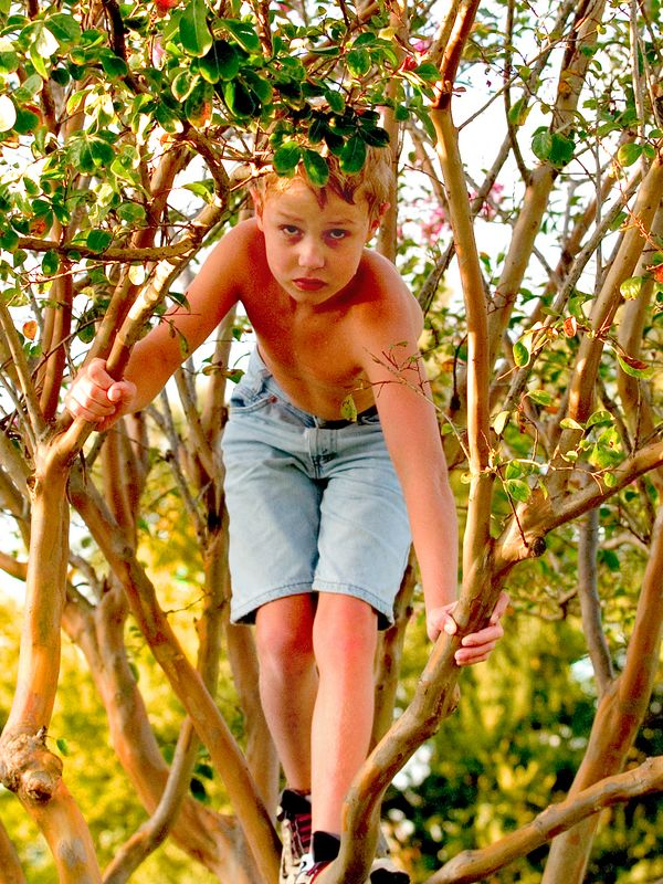 Dad, can I get down from this tree now, please Dad, nowwww, I want to do something fun, September 4, 2004.