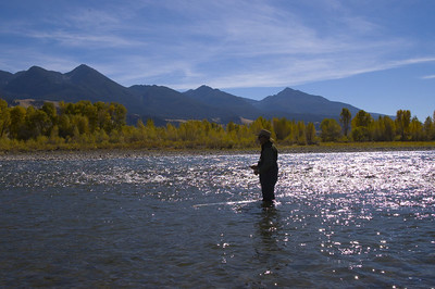 Flyfishing the Yellowstone 2005