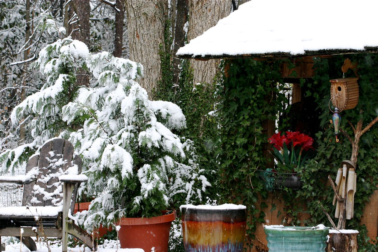 Real snow in Atlanta.  My little house with the Leland Cyprus trees looking like up North.