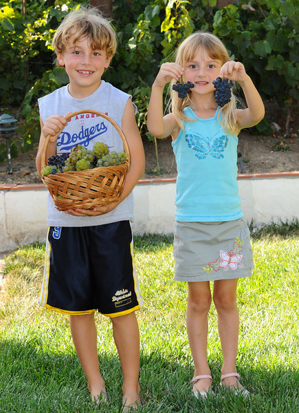 Max and Celia harvest Merlot and Chardonnay from the back yard!