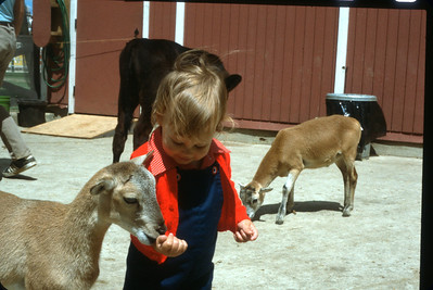 Edward feeding the goats