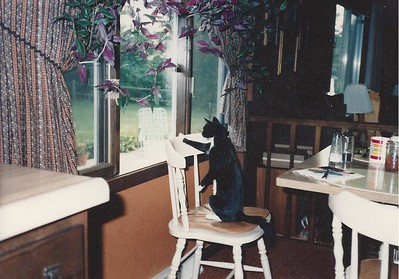 Juniper watching the birds at the feeder - 1984