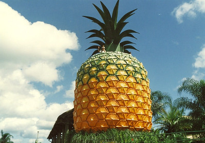 Tim and one of the boys on top of the Big Pineapple