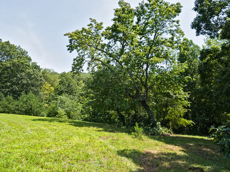 View from the west side of the site, just before construction begins. Sourwood tree in right of photo will have to go ...