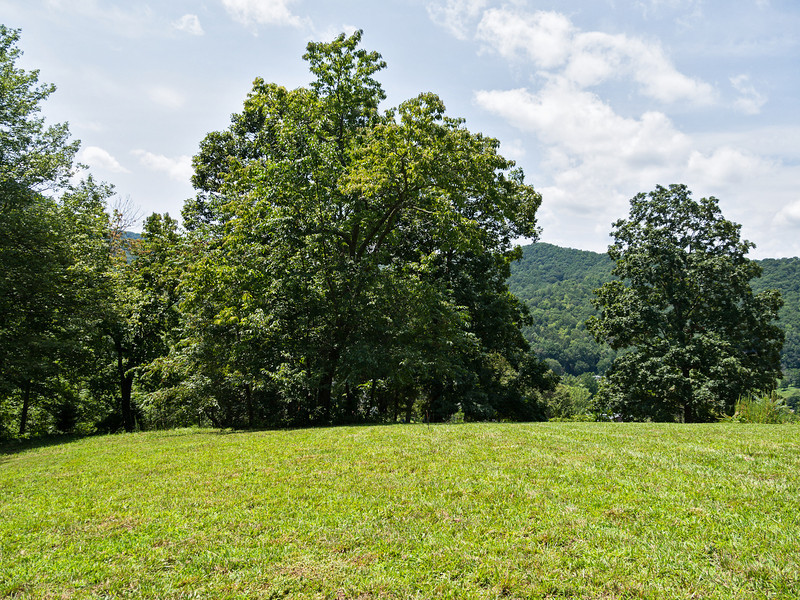 View from the east side of the site, just before construction begins. Sourwood tree in center of photo will have to go ...