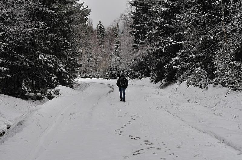 cestou k Prášilskému jezeru