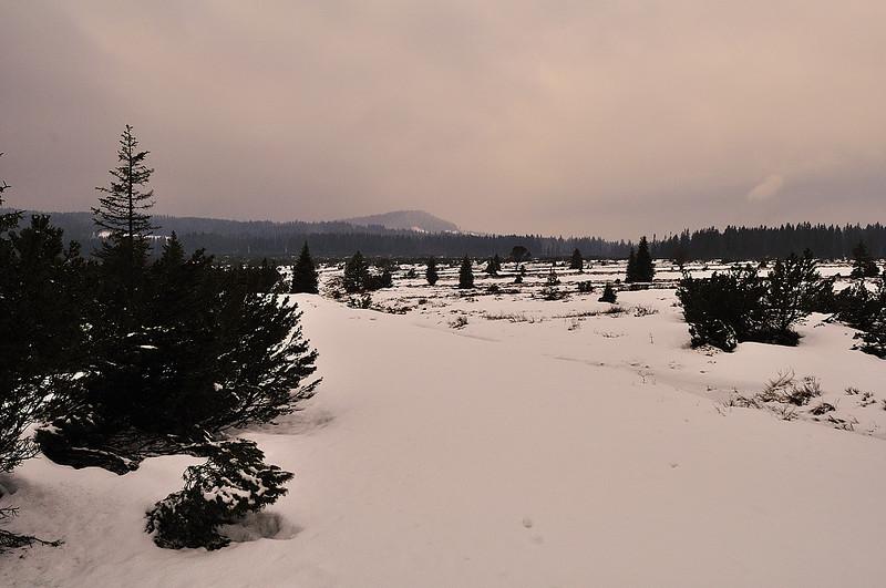rašeliniště Jezerní slať v zimě
