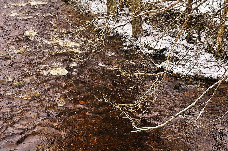 Prášilský potok - detail