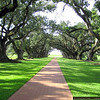 The grand entrance to Oak Alley Plantation.