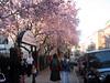 Boston in spring