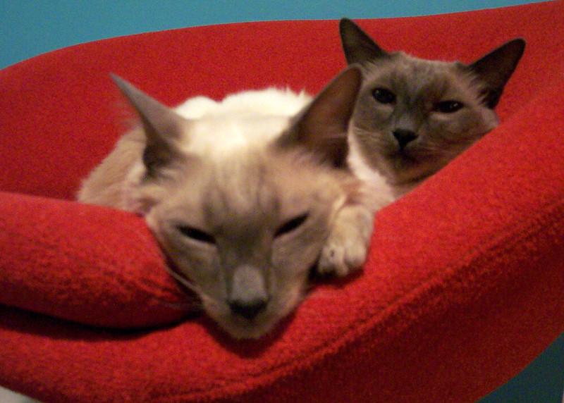 CatsCDS_0517