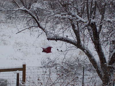 The birds are thankful for the many feeders we have put out around the house.