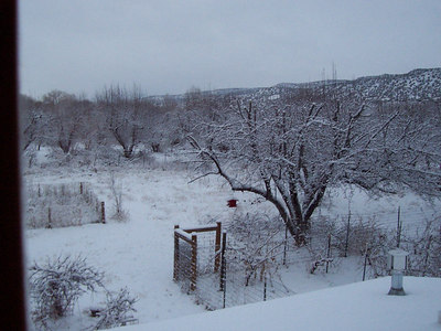 """The back yard: The trees are much more """"frosted"""" by this snow than they were by the first one."""
