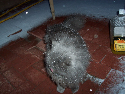 Snow covers Einstein like sugar on a Christmas cookie! He doesn't know quite what to think of his first taste. Here he takes refuge under the patio table from the mysterious white stuff.
