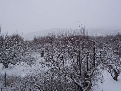 Falling snow creates a foggy appearance looking over the valley toward the mesa.