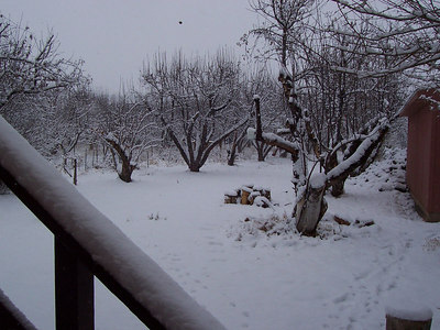 As the day brightens the true depth of the snow is revealed in the side yard.