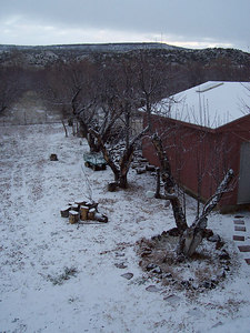 Our side yard on Wed. morning.