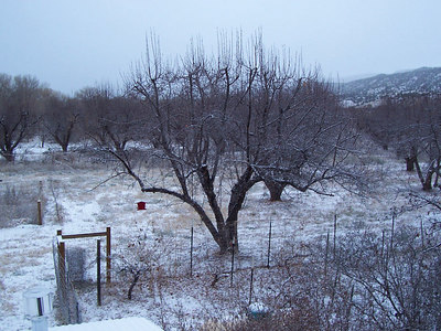 The back yard. The bird feeder suddenly became more popular after the snow!