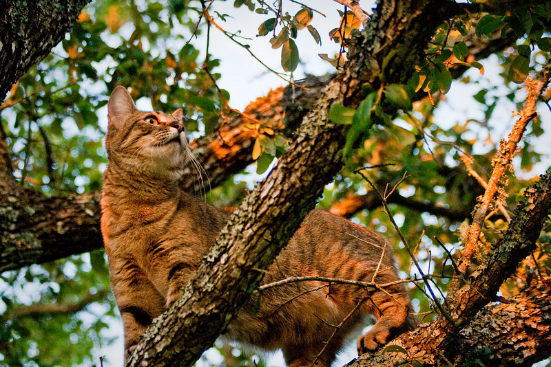 The mocking birds really got upset when Tiger climbed a tree, even though it was not the tree their nest was in.