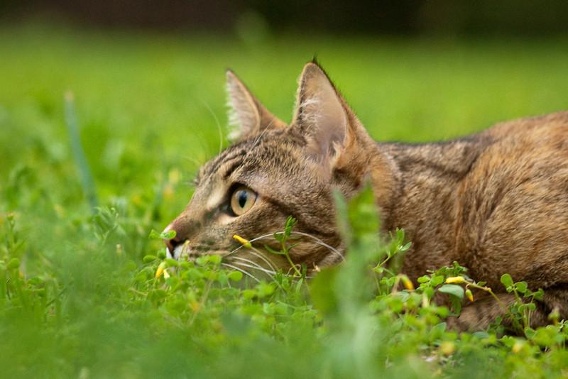 The little huntress