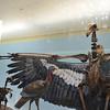 Condor bones from La Brea Tar Pits