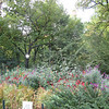 Wild Shakespearian garden.