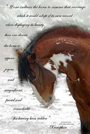 Just Horses